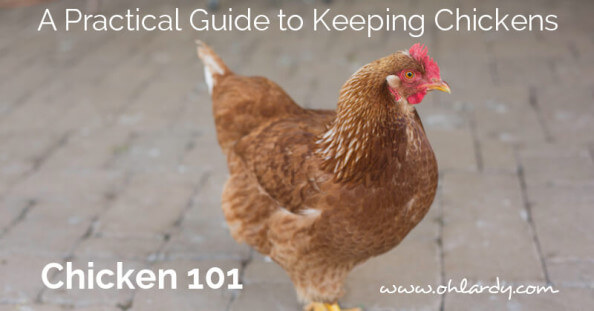 A Practical Guide to Keeping Chickens, Chicken 101 - ohlardy.com