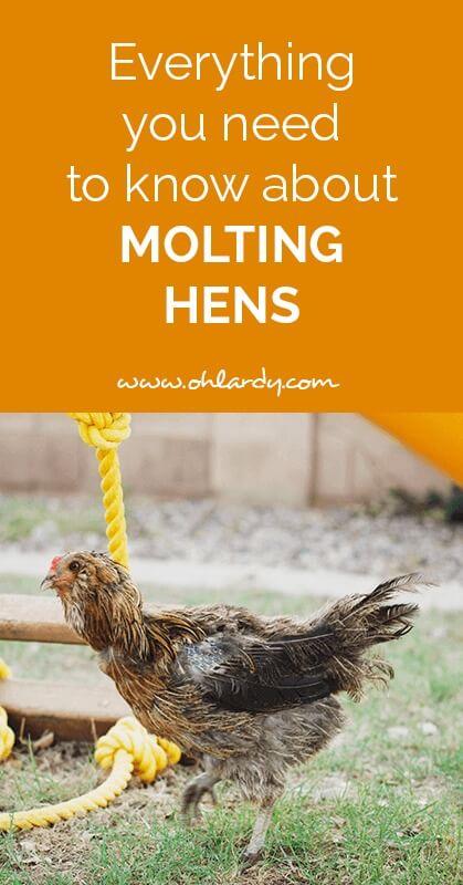 molting hens - ohlardy.com