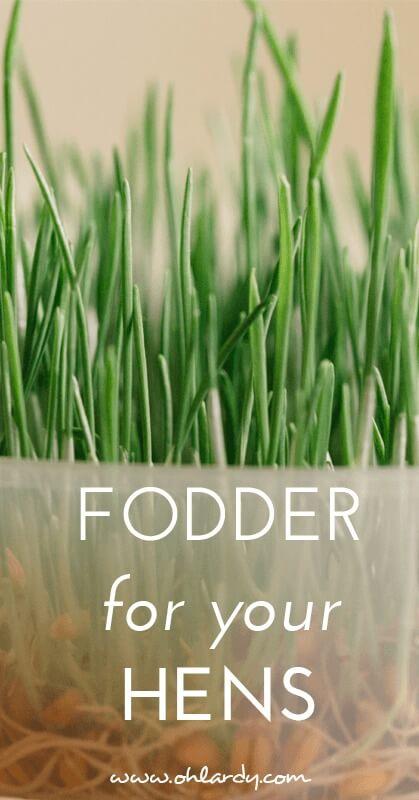 fodder for your hens - ohlardy.com