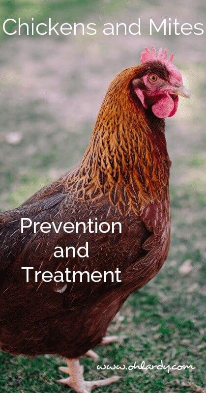 chickens and mites - ohlardy.com