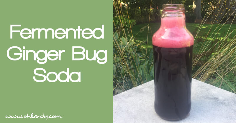 Fermented Ginger Bug Soda Recipe - www.ohlardy.com