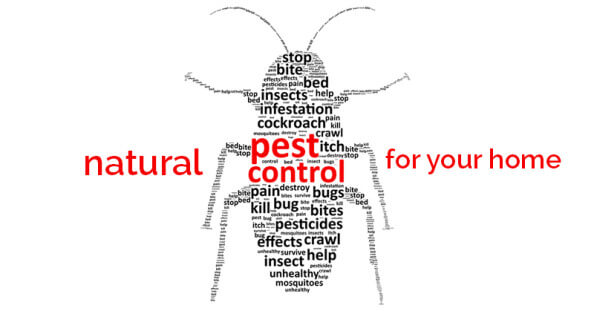 natural pesticides for your home - ohlardy.com