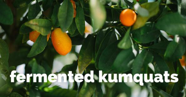 fermented kumquats - ohlardy.com